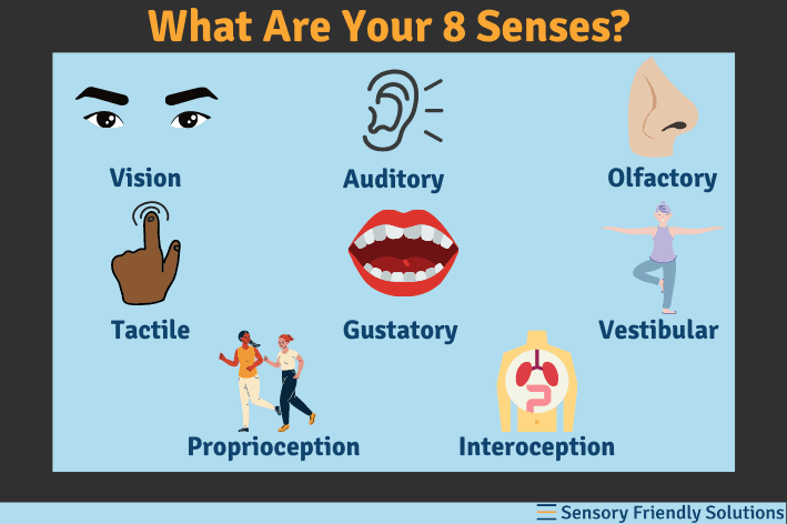 Infographic highlights the 8 different senses.